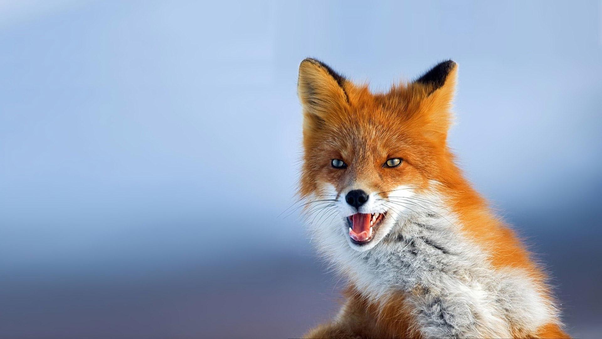 Foxx1